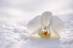 Les bienfaits du Shiatsu en hiver